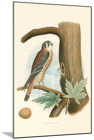 Sparrow Hawk and Egg--Mounted Art Print