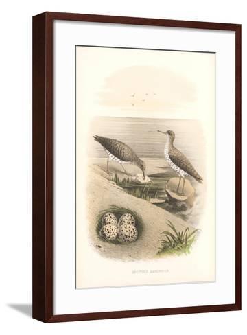 Spotted Sandpipers, Eggs--Framed Art Print