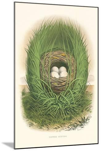 Towhee Bunting Nest and Eggs--Mounted Art Print