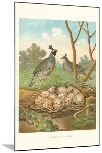 Valley Quail Nest and Eggs--Mounted Art Print