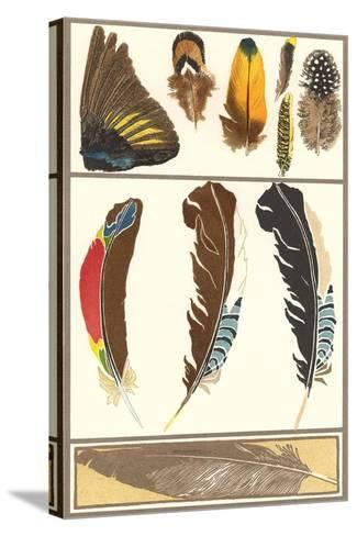 Various Feathers--Stretched Canvas Print
