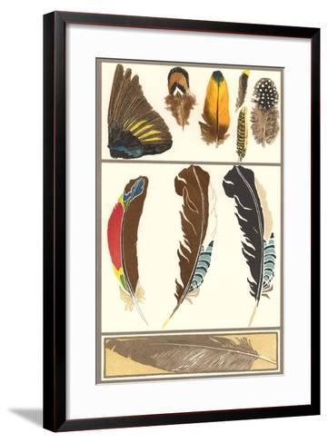 Various Feathers--Framed Art Print
