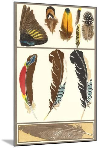 Various Feathers--Mounted Art Print