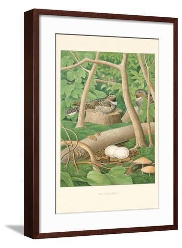 Whippoorwill Nest and Eggs--Framed Art Print