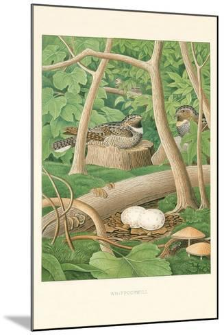 Whippoorwill Nest and Eggs--Mounted Art Print