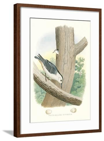 White-Bellied Nuthatch Nest and Eggs--Framed Art Print