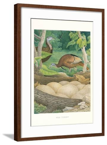 Wild Turkey Nest and Eggs--Framed Art Print