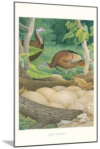 Wild Turkey Nest and Eggs--Mounted Art Print