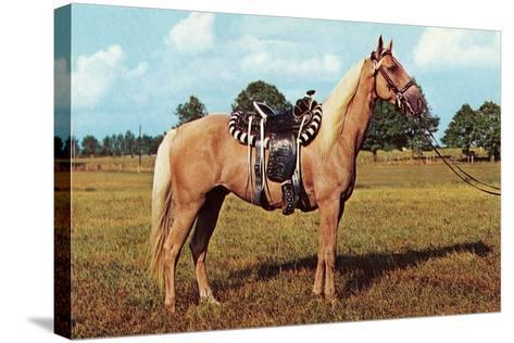 Palomino--Stretched Canvas Print