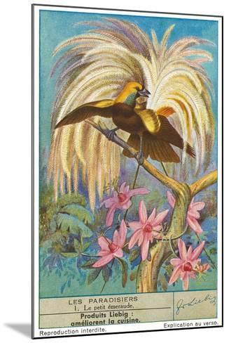 Bird of Paradise--Mounted Art Print