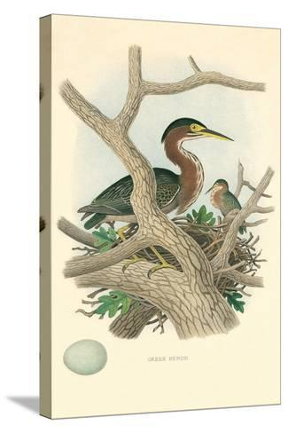 Green Heron Nest and Eggs--Stretched Canvas Print