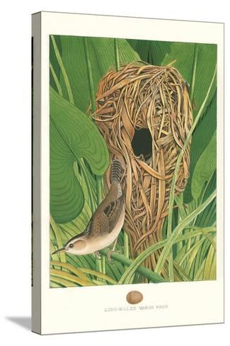Long-Billed Marsh Wren--Stretched Canvas Print