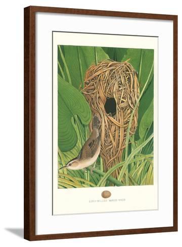 Long-Billed Marsh Wren--Framed Art Print