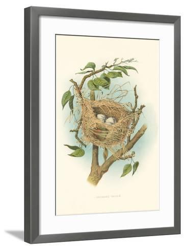 Orchard Oriole Nest and Eggs--Framed Art Print