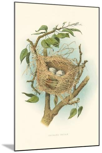 Orchard Oriole Nest and Eggs--Mounted Art Print