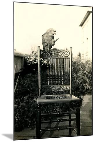 Parrot on Chair Back--Mounted Art Print