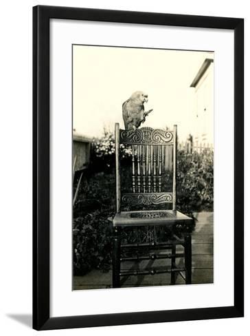 Parrot on Chair Back--Framed Art Print