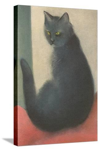 Suspicious Cat--Stretched Canvas Print