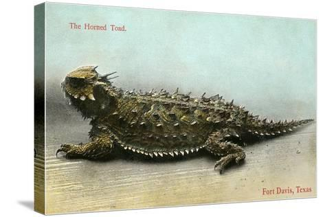 Horned Toad, Fort Davis--Stretched Canvas Print