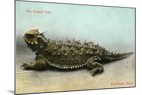 Horned Toad, Fort Davis--Mounted Art Print