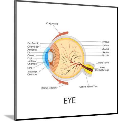 Human Eye Anatomy-stockshoppe-Mounted Art Print