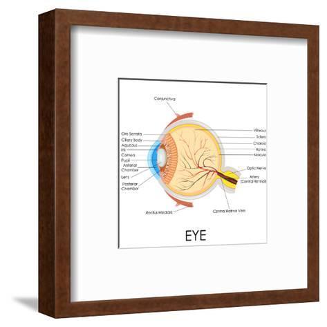 Human Eye Anatomy-stockshoppe-Framed Art Print