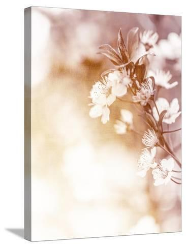 White Cherry Flowers on Sunny Day, Floral Branch of Blooming Tree in the Garden-Anna Omelchenko-Stretched Canvas Print