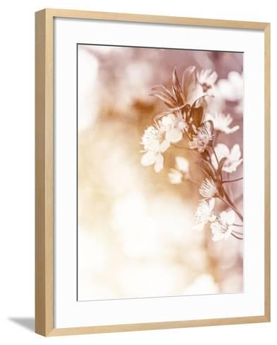 White Cherry Flowers on Sunny Day, Floral Branch of Blooming Tree in the Garden-Anna Omelchenko-Framed Art Print