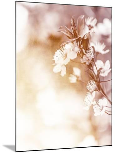 White Cherry Flowers on Sunny Day, Floral Branch of Blooming Tree in the Garden-Anna Omelchenko-Mounted Art Print