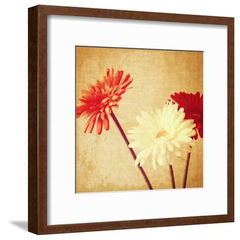 Art Floral Vintage Background with Red and White Gerbera in Sepia-Irina QQQ-Framed Art Print