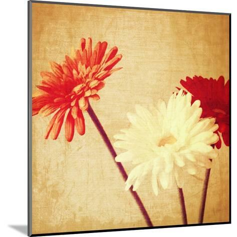 Art Floral Vintage Background with Red and White Gerbera in Sepia-Irina QQQ-Mounted Art Print