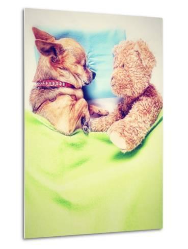A Cute Chihuahua Sleeping Next to a Teddy Bear-graphicphoto-Metal Print