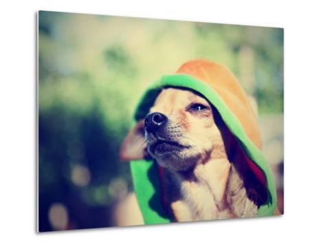 A Cute Chihuahua in a Hoodie-graphicphoto-Metal Print