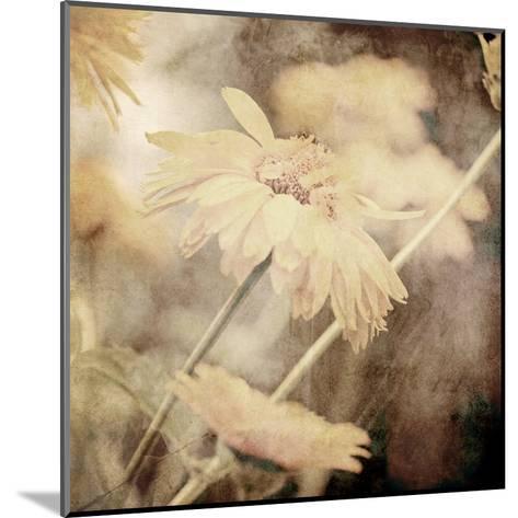 Art Floral Vintage Sepia Background with Light Yellow Chamomiles-Irina QQQ-Mounted Art Print
