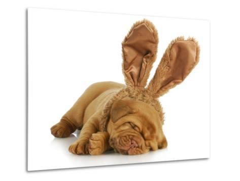 Puppy Wearing Bunny Ears - Dog De Bordeaux Wearing Easter Bunny Ears on White Background-Willee Cole-Metal Print
