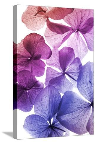 Colorful Flower Petal Closeup-maaram-Stretched Canvas Print