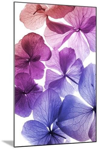 Colorful Flower Petal Closeup-maaram-Mounted Art Print