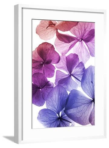 Colorful Flower Petal Closeup-maaram-Framed Art Print