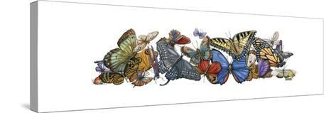 Wings of Splendor I-Wendy Russell-Stretched Canvas Print