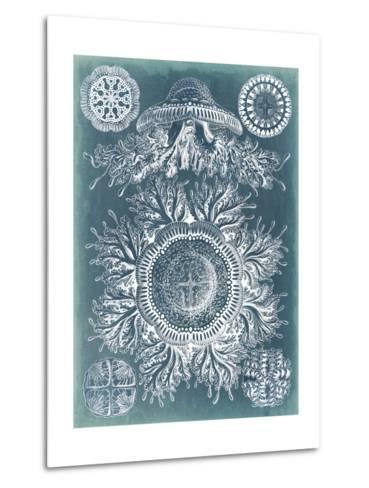 Sealife Blueprint I-Vision Studio-Metal Print