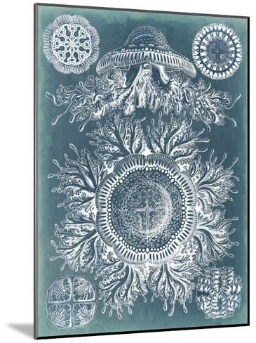 Sealife Blueprint I-Vision Studio-Mounted Art Print