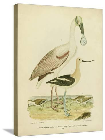 Antique Spoonbill and Sandpipers-Alexander Wilson-Stretched Canvas Print