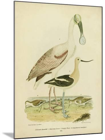 Antique Spoonbill and Sandpipers-Alexander Wilson-Mounted Art Print