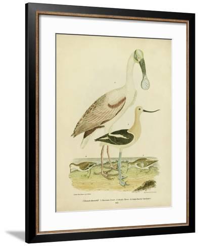 Antique Spoonbill and Sandpipers-Alexander Wilson-Framed Art Print