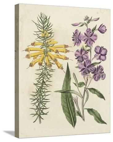 Garden Pairings I-Sydenham Edwards-Stretched Canvas Print