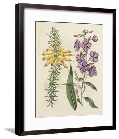 Garden Pairings I-Sydenham Edwards-Framed Art Print