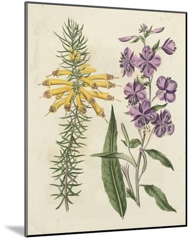 Garden Pairings I-Sydenham Edwards-Mounted Art Print