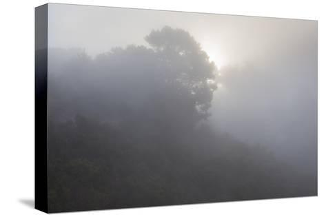 Sunrise Through Fog-Henri Silberman-Stretched Canvas Print