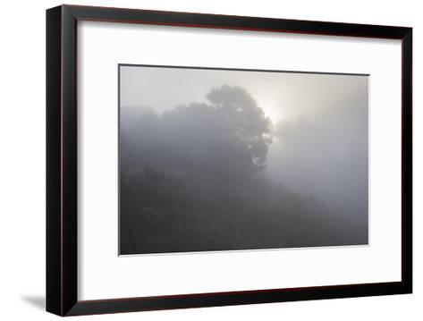 Sunrise Through Fog-Henri Silberman-Framed Art Print