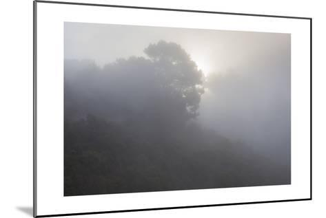 Sunrise Through Fog-Henri Silberman-Mounted Photographic Print
